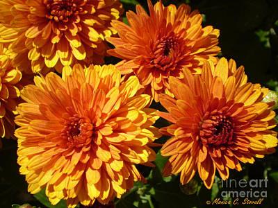 M Bright Orange Flowers Collection No. Bof4 Art Print