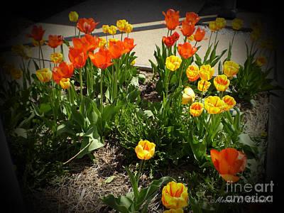 M Color Combination Flowers Collection No. Cc10 Art Print