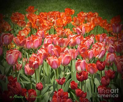 M Color Combination Flowers Collection No. Cc12 Art Print