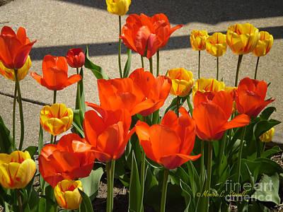 M Color Combination Flowers Collection No. Cc3 Art Print
