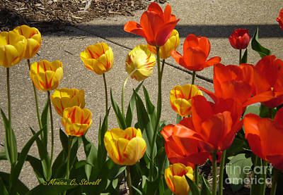 M Color Combination Flowers Collection No. Cc4 Art Print