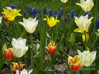M Color Combination Flowers Collection No. Cc5 Art Print