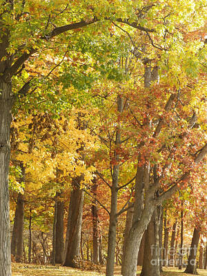 Photograph - M Landscapes Fall Collection No. Lf12 by Monica C Stovall
