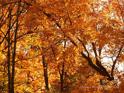 Photograph - M Landscapes Fall Collection No. Lf28 by Monica C Stovall