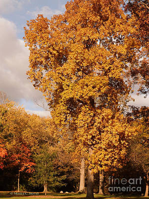Photograph - M Landscapes Fall Collection No. Lf29 by Monica C Stovall