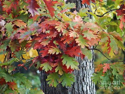 Photograph - M Landscapes Fall Collection No. Lf3 by Monica C Stovall