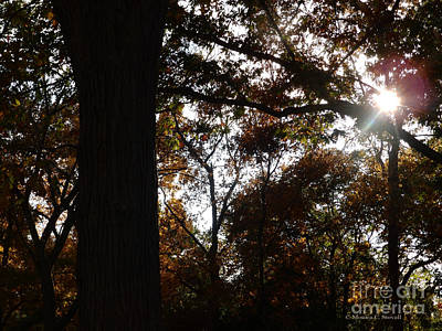 Photograph - M Landscapes Fall Collection No. Lf34 by Monica C Stovall
