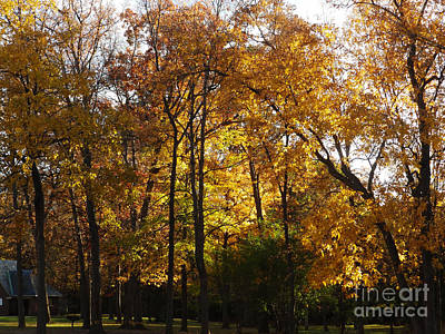 Photograph - M Landscapes Fall Collection No. Lf35 by Monica C Stovall
