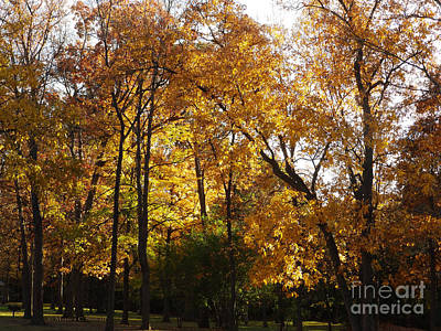 Photograph - M Landscapes Fall Collection No. Lf36 by Monica C Stovall