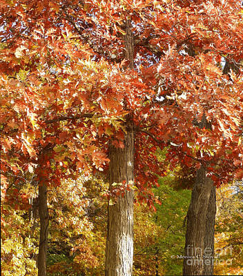 Photograph - M Landscapes Fall Collection No. Lf5 by Monica C Stovall