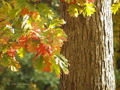 Photograph - Oak Tree Fall Colors - M Landscapes Fall Collection No. Lf6 by Monica C Stovall