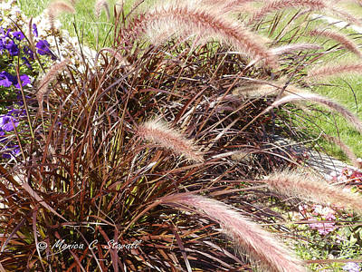 Photograph - M Plants Collection No. Pl14 by Monica C Stovall