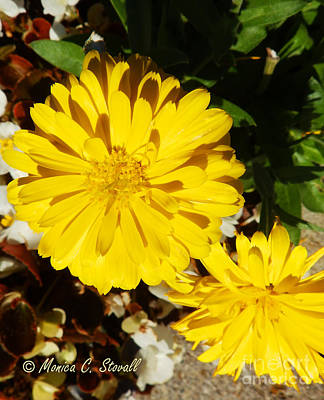 Photograph - M Shades Of Yellow Flowers Collection No. Y31 by Monica C Stovall