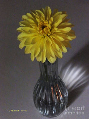 Photograph - M Still Life Collection Yellow Flower Clear Vase No. Slc11 by Monica C Stovall