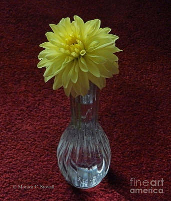 Photograph - M Still Life Collection Yellow Flower Clear Vase Red No. Slc20 by Monica C Stovall