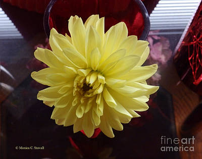 Photograph - M Still Life Collection Yellow Flower Red Wine Pink No. Scl19 by Monica C Stovall