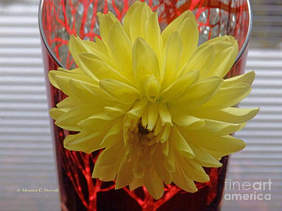 Photograph - M Still Life Collection Yellow Flower Stripes Glass Red Vase No. Slc21 by Monica C Stovall