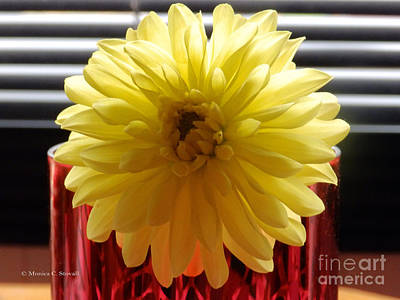 Photograph - M Still Life Collection Yellow Flower Stripes Red Vase No. Scl24 by Monica C Stovall