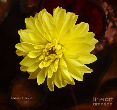 Photograph - M Still Life Collection Yellow Flower Wine Vase No. Scl26 by Monica C Stovall