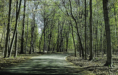 Photograph - M119 Tunnel Of Trees Michigan by LeeAnn McLaneGoetz McLaneGoetzStudioLLCcom
