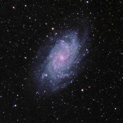 Photograph - M33--the Triangulum Galaxy by Alan Vance Ley
