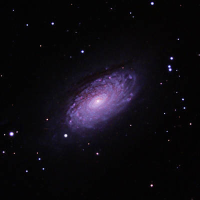 Photograph - M63--the Sunflower Galaxy by Alan Vance Ley