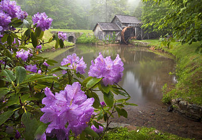 Virginia Postcards Photograph - Mabry Rhododendron by Brent McGuirt
