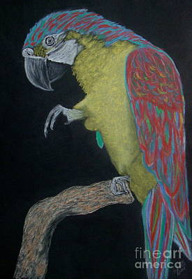 Wall Art - Pastel - Macaw 2 by Cybele Chaves