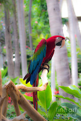 Photograph - Macaw by Angela DeFrias