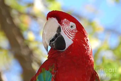 Macaw At San Diego Zoo Art Print