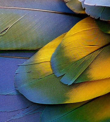 Photograph - Macaw Blue by Colleen Renshaw