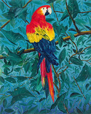 Painting - Macaw by Carl Genovese