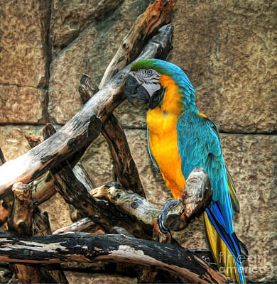 Bir Painting - Macaw by Loyda Herrera