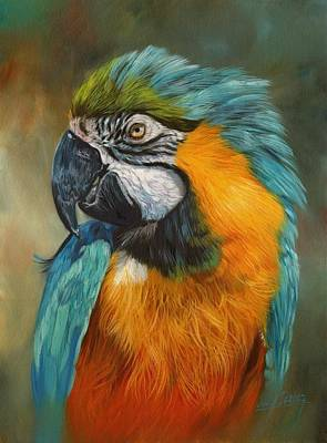 Macaws Painting - Macaw Parrot by David Stribbling