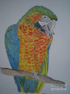Macaw Parrot Painting Original