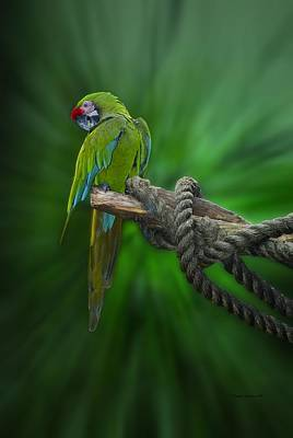 By Thomas Woolworth Photograph - Macaw Parrot Preening by Thomas Woolworth