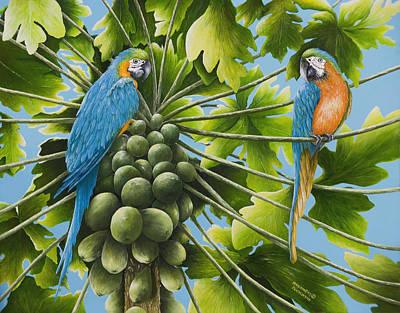 Macaw Parrots In Papaya Tree Art Print
