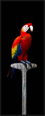 Digital Art - Macaw... by Tim Fillingim