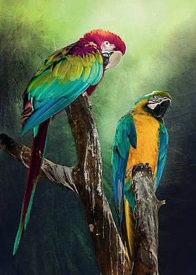 Macaws Siesta Time Art Print