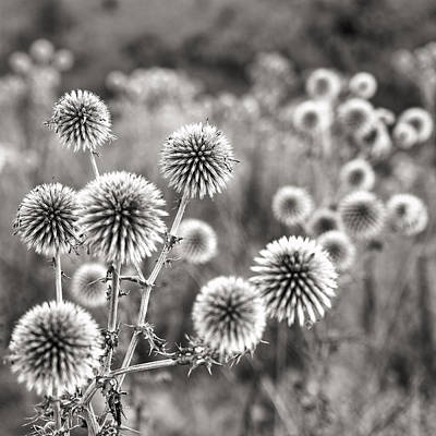 Photograph - Macedonian Field Flowers by For Ninety One Days