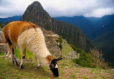 Machu Picchu Peru Art Print by Max Ratchkauskas