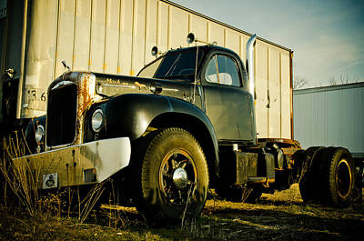 Bobtails Photograph - Mack  by Off The Beaten Path Photography - Andrew Alexander