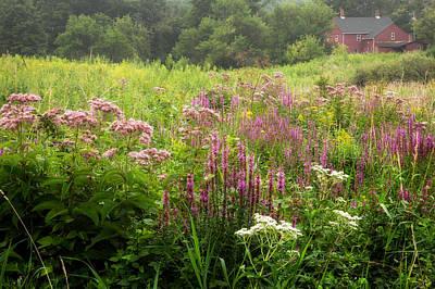 Wildflowers Photograph - Macricostas  by Bill Wakeley