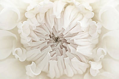 Photograph - Macro Dahlia Flower Ivory White by Jennie Marie Schell