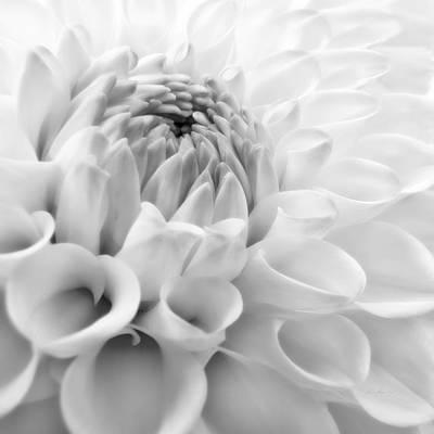 Animal Portraits - Macro Dahlia Flower Monochrome by Jennie Marie Schell