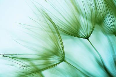 Photograph - Macro Dandelion Seed by Jasmina007