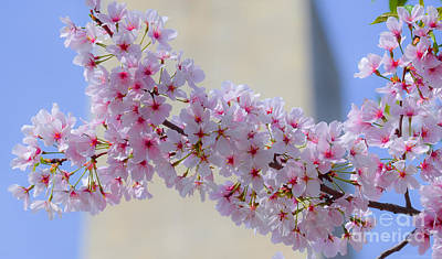 Photograph - Macro Dc Cherry Blossoms On Washington Monument by Jeff at JSJ Photography