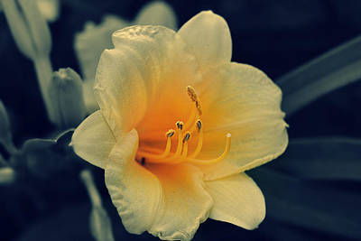 Photograph - Macro Flower by Amber Summerow