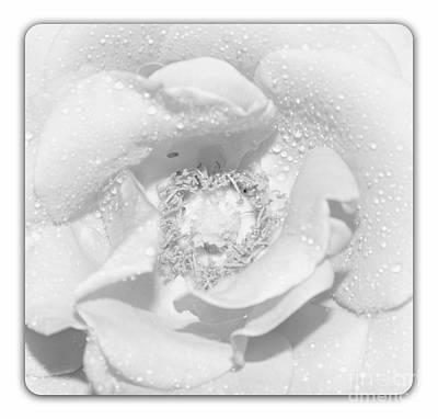 Macro Image Of A Rose Original