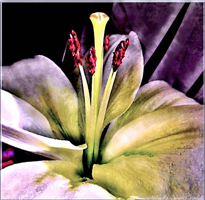 Macro Luminous Lily  Art Print by Danielle  Parent